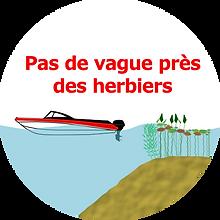 limite+_herbier_vague2.png