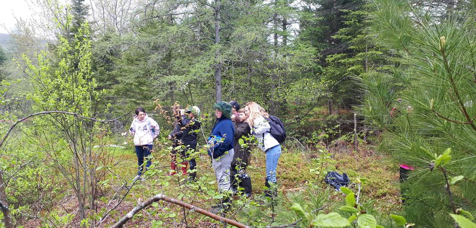 Activité de découverte des plantes de milieux humides