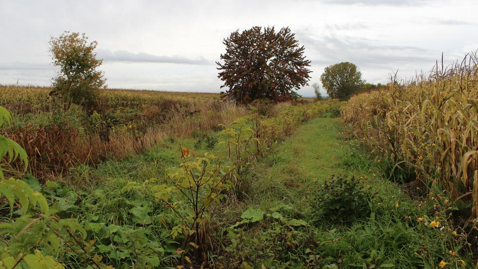 Bande riveraine située à Maskinongé. Elle est composée de physocarpe à feuilles d'obier, de saule discolore et de sureau du Canada.