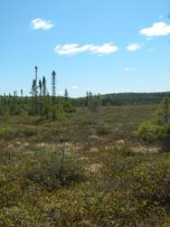 Objectifs de conservations des milieux humides et hydriques