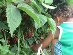 dante blackberries 2015