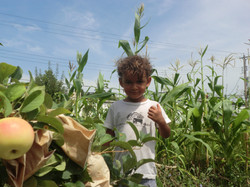 Dante, Apples and Corn 2014
