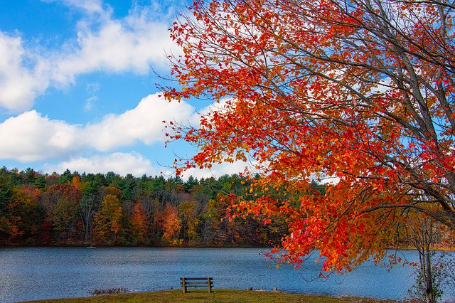 New England Foliage Lake  Fall  Nature  Autumn
