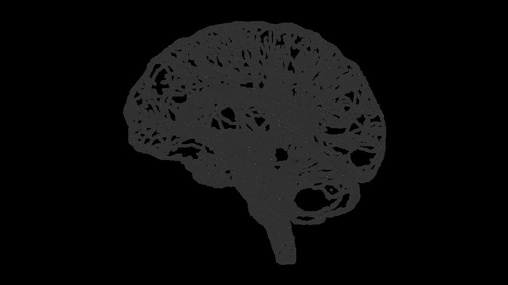 Brain Sketch_edited.png