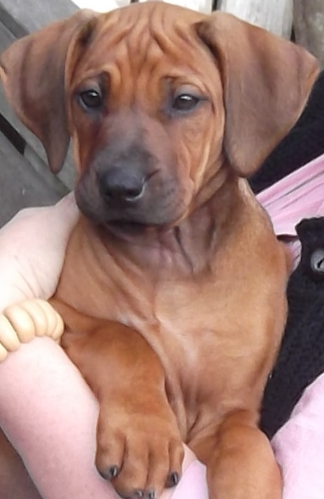 Betsy-pup-pretty-girl-3-months-old_edite