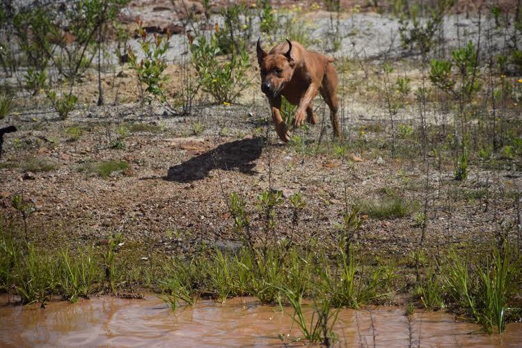 Betsy running