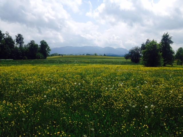 Blumenwiese auf Etappe im bayerischen Voralpenland bei Bad Tölz