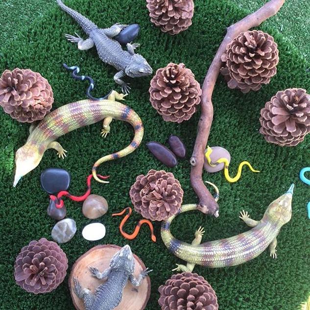 #Bluetongues#Australian #lizards #imagin