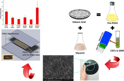 New Paper by Ghazal Tadayyon onthe Development of a ResorbableStrain Sensor Published inMaterials
