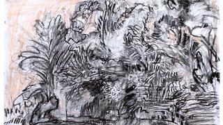 floresta 2
