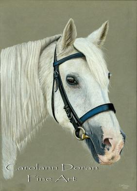 White Horse WM.jpg