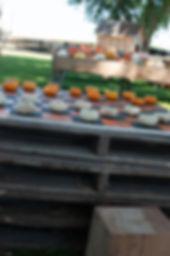 2019_SEPT_GreeneFieldsPumpkinFarm-31.jpg