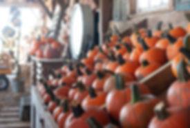 2019_SEPT_GreeneFieldsPumpkinFarm-22.jpg