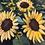 "Thumbnail: Sunflower Field acrylic painting on canvas, 16"" x 20"" framed"
