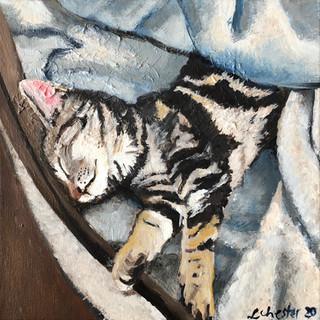 Lweroy's Kitty, 12_ x 12_ SOLD.jpeg