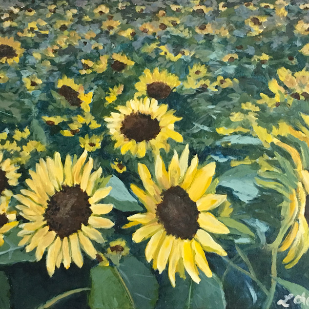 Sunflowers 16 x 20.jpg