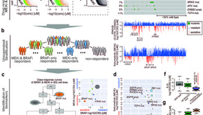 Differentiating drug response using unsupervised segmentation
