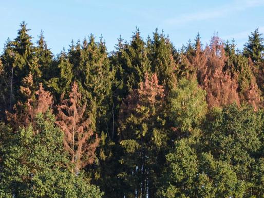 L'inquiétante invasion des insectes mangeurs de forêts