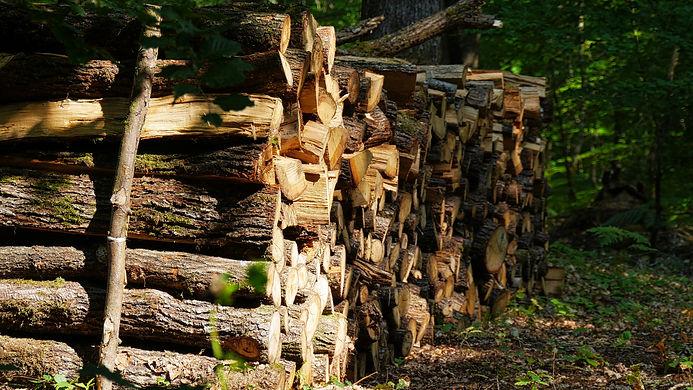 arbres st agil 14 luminar - copie.jpg