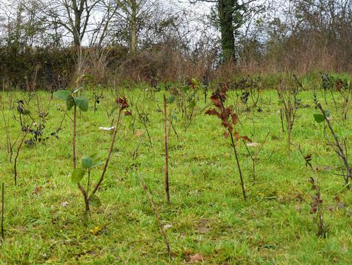 Planter 3000 arbres en 3 jours! Premier POC de TreesEverywhere