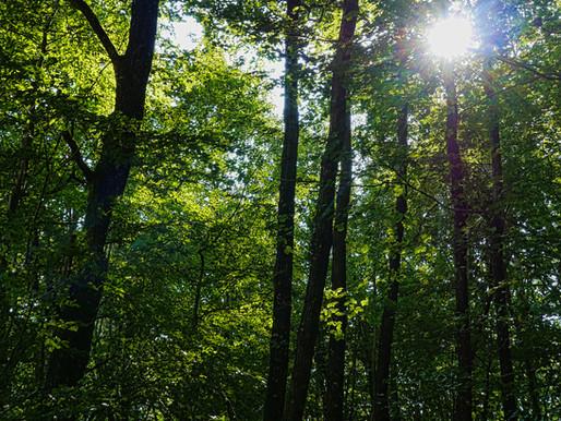 Les forêts, des puits de carbone au secours de la planète