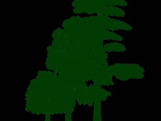 Pr. Akira Miyawaki, ardent promoteur d'une reforestation «grandeur nature»