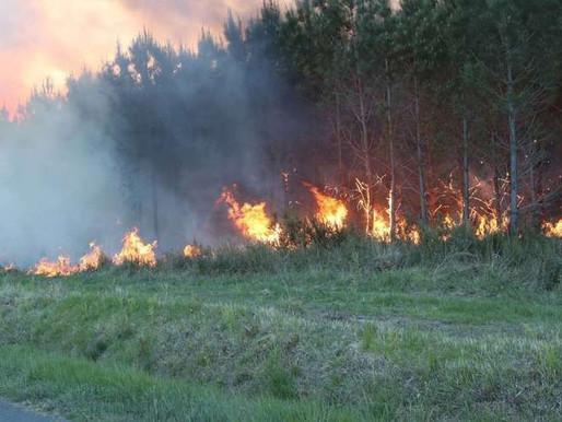 Comment repenser la forêt en France face aux risques incendies ?
