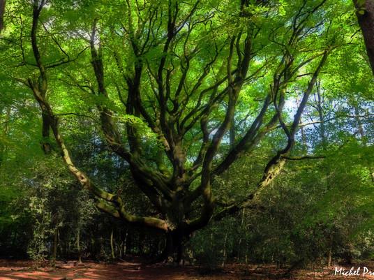 Brocéliande, une forêt légendaire