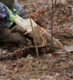 Notre méthode de plantation: quels bénéfices pour la biodiversité?