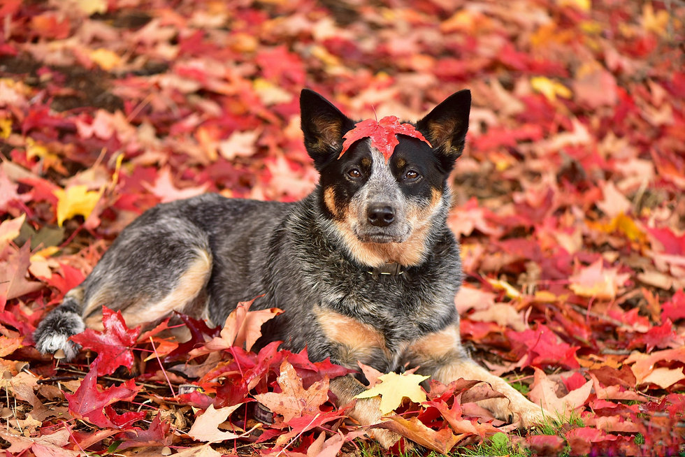 Dog in the park in the fall..jpg