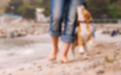 beagle walking.jpg