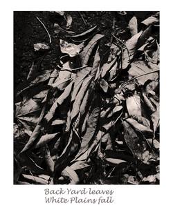 back yard leaves