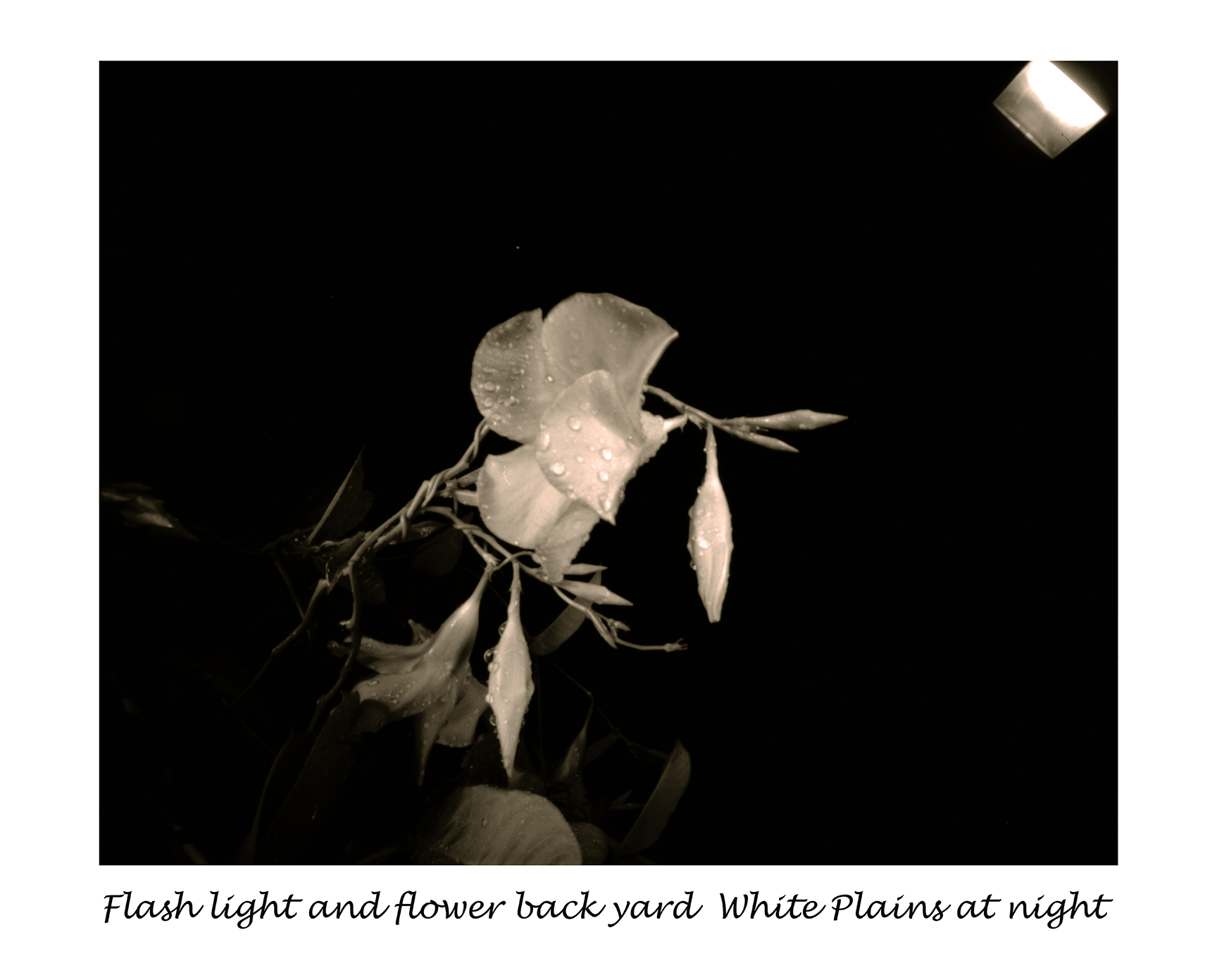 Flash light and flower
