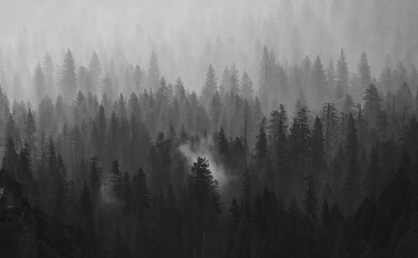Blaces-Forest