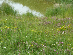 Meadow and pond