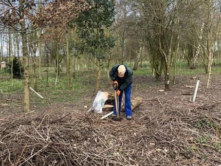 Delayed tree planting