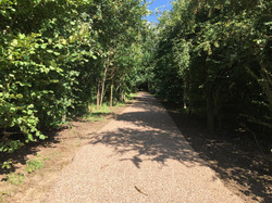 New path through wood