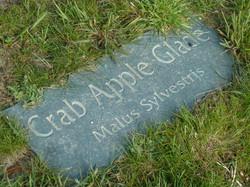 Crab Apple Glade