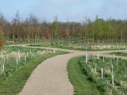 Beech wood paths
