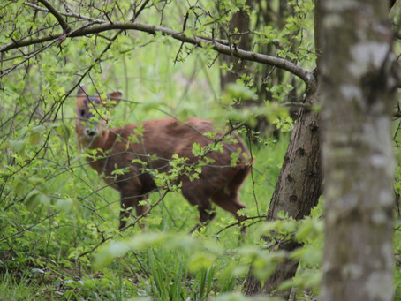 What wildlife can we record in the woods this month?