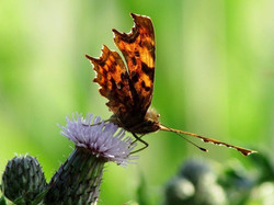 Comma in Westgate