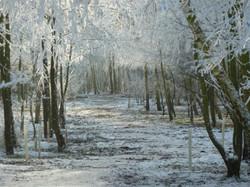 Trees look good in all seasons