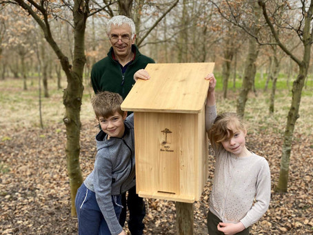 Bee Houses in the woods