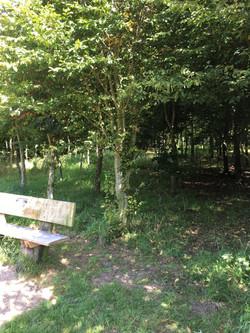 Established trees August 2017