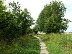 Beech Wood original path