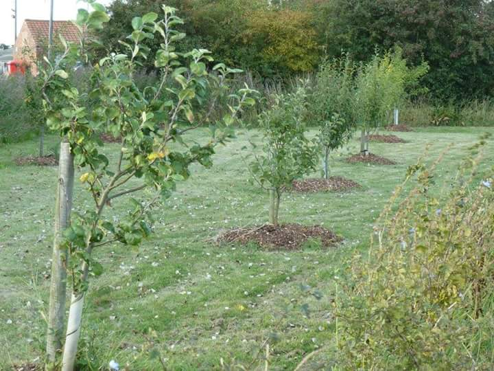 The community orchard