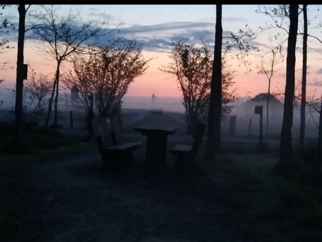 Dawn Chorus at Westgate Wood