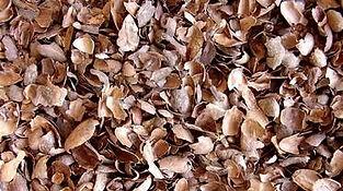 Coque de cacao planète terre
