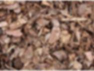 ecorce pin sylvestre planète terre