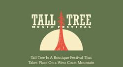 Tall Tree 2014